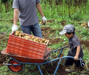 よっこらしょイベント『ジャガイモの収穫と朝穫り野菜カレー』の風景